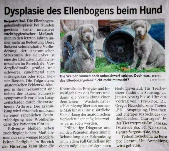 Zeitungsartikel Bergedorfer Zeitung Dysplasie des Ellenbogens beim Hund