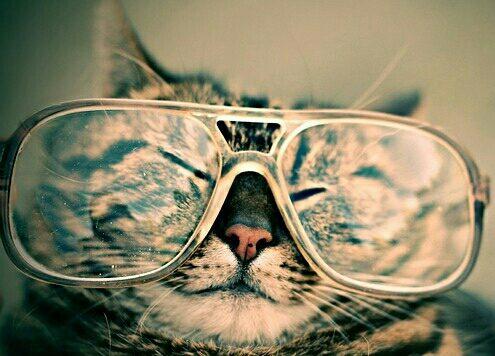 Katze mit Brille humoristisch