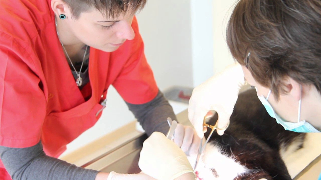 Zahnsanierung bei einer Katze