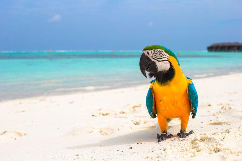 Papagei im Urlaub am Strand bei Tierarztbergedorf