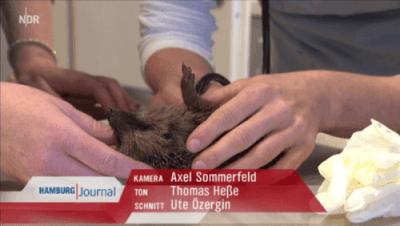 """Der NDR bei Dr. Fenske """"Igel in Not"""""""
