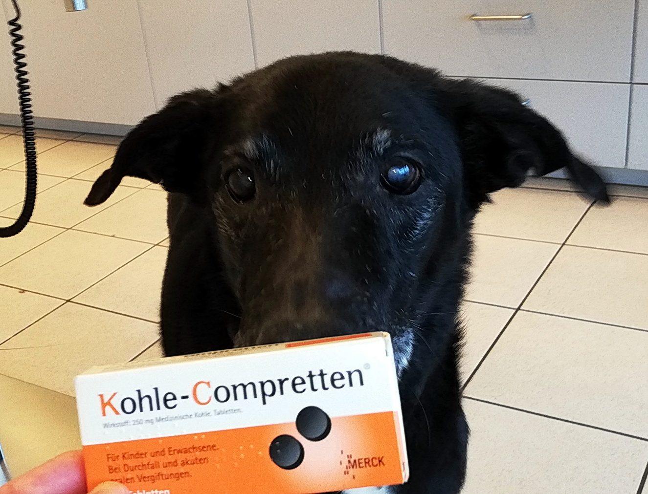 kohletabletten-hund-hilft-das