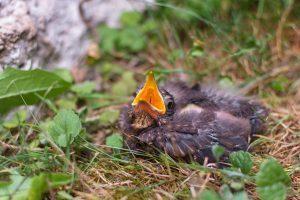 wildvogel-auf-dem-boden