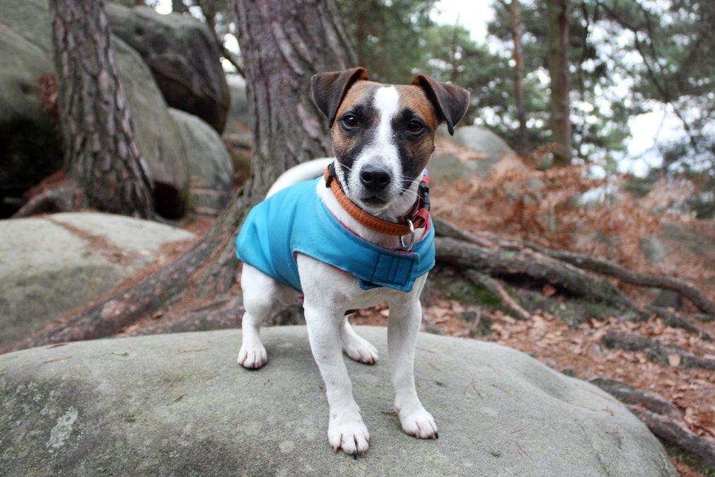 kastration-hund-terrier-titel