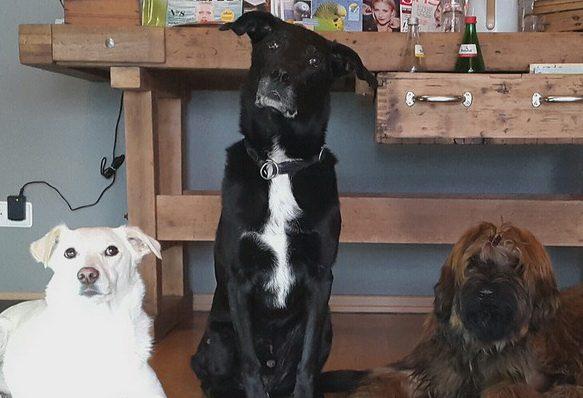 tierarztbergedorf-hunde-meinung-kastration