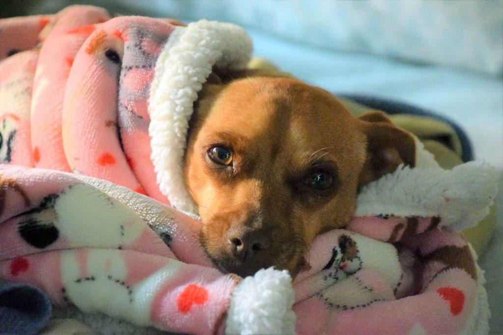 trauriger-hund
