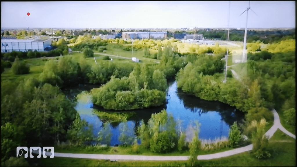 hundkatzemaus-ententeich-campus-flensburg