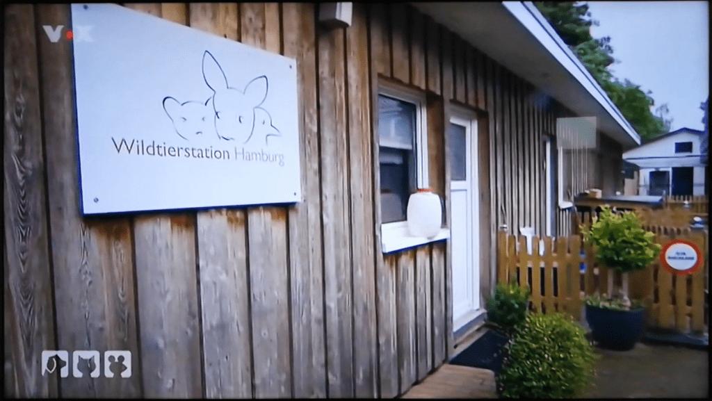 hundkatzemaus-wildtierstation-hamburg